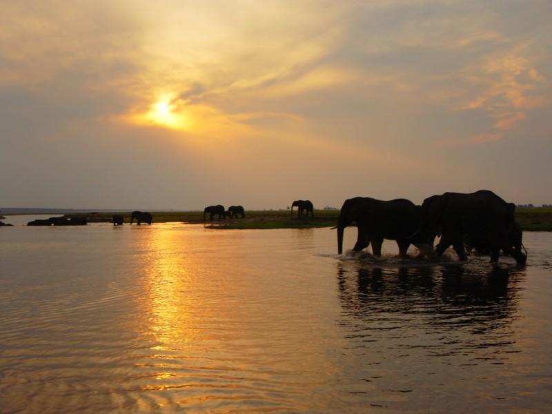 Elefanten bei Sonnenuntergang im Chobe