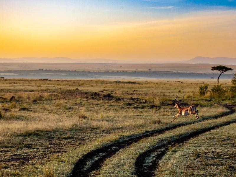 Kenia - Strand & Safari ganz privat - inkl. Flug