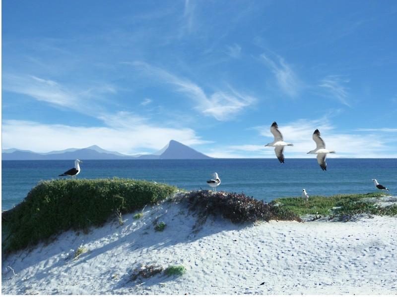 Traumstrände & Meer am Western Cape