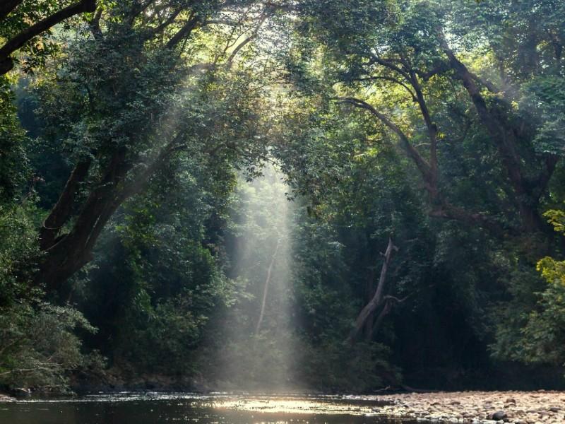 Malaysia - Taman Negara erforschen