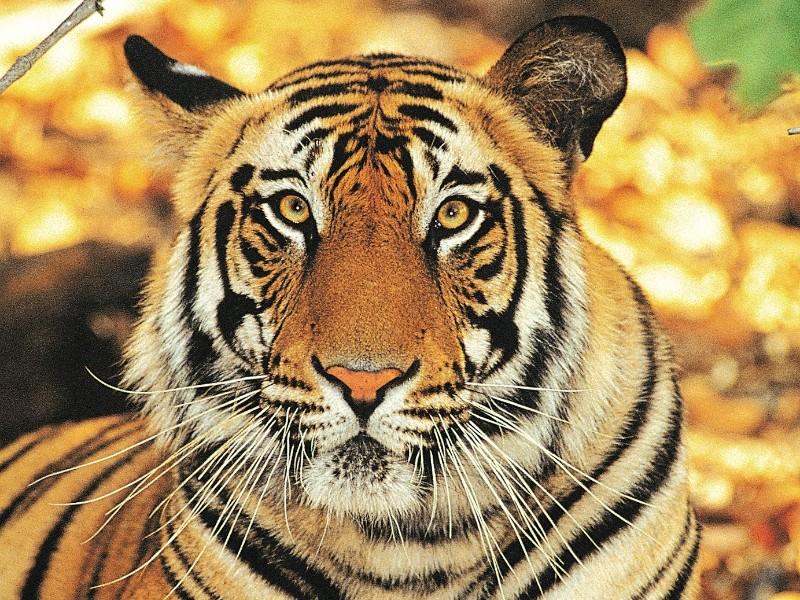 Höhepunkte Rajasthans & Ranthambhore Nationalpark