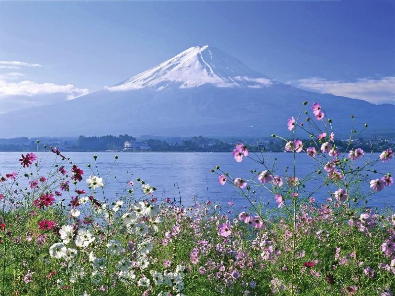 Fuji mit Blumen