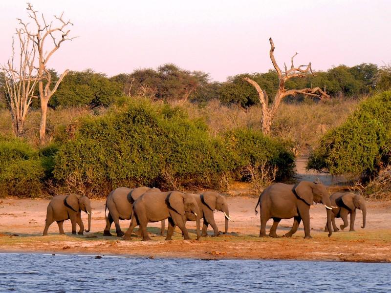 Botswanas Wildnis erleben