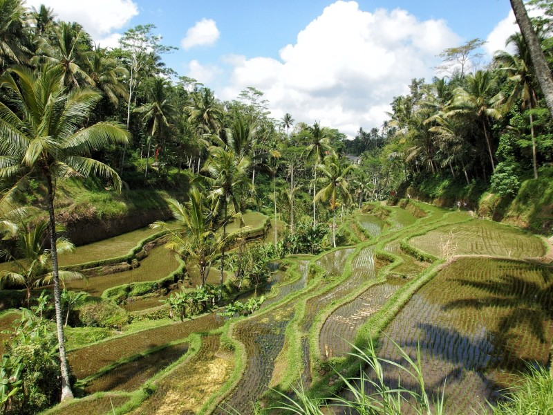 Indonesien - Bali erleben