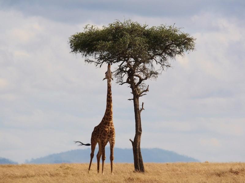 Strand & Safari in Kenia - inkl. Flug