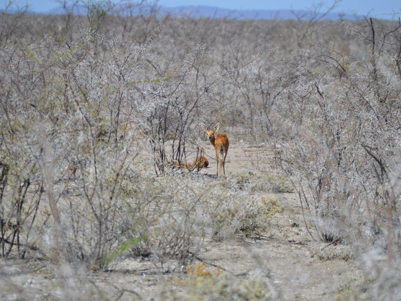Namibia exklusiv erleben