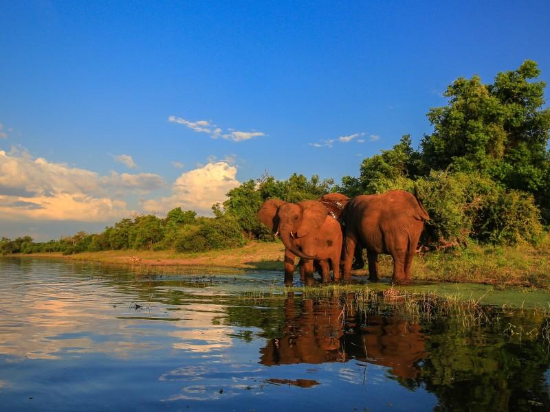Elefanten am Wasser, Kruger