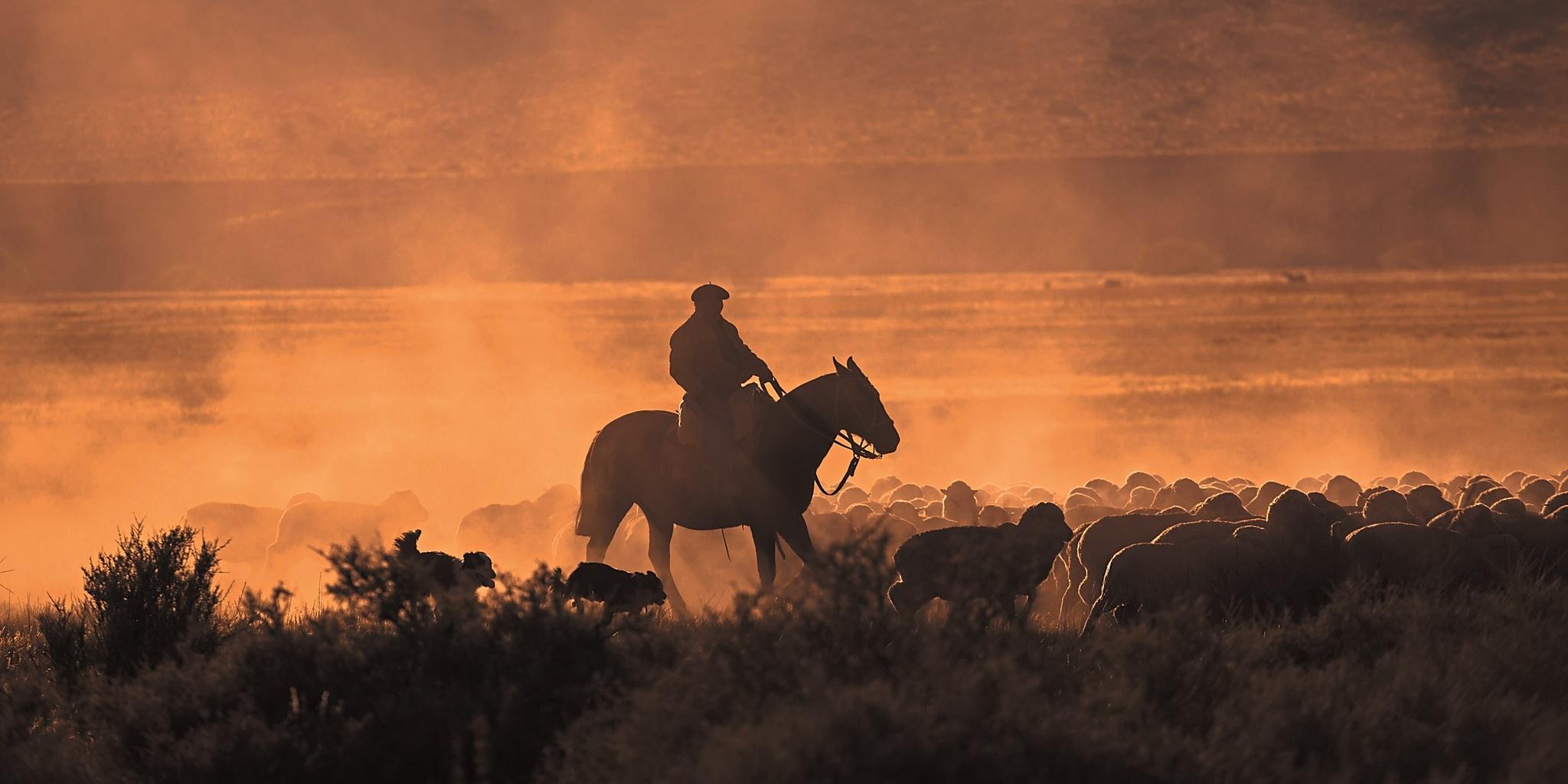 Gaucho auf Pferd