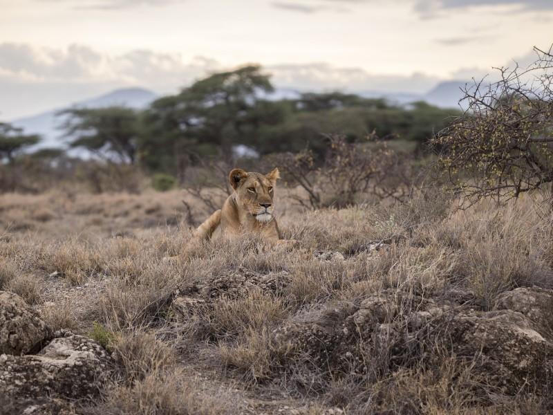 Tansania - Sansibar & Serengeti - inkl. Flug