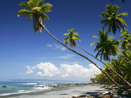 Urwälder & Ozeane