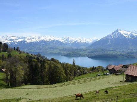 schweiz_interlaken_thunersee