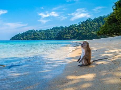 Affe am Strand in der Andamanensee