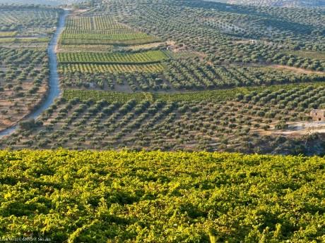griechenland-kreta-skalani wines