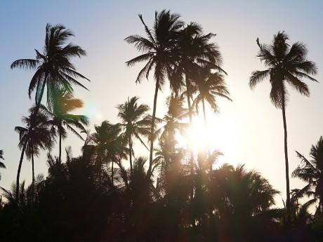 Palmen, Sansibar