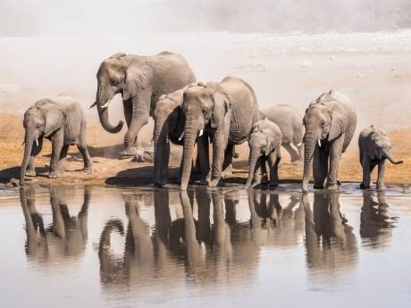 Elefantenherde am Wasser, Etosha