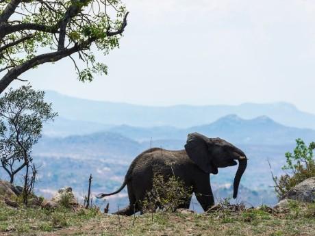 Lodges im Kruger Nationalpark