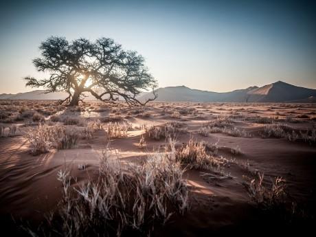 Wüste bei Sonnenaufgang