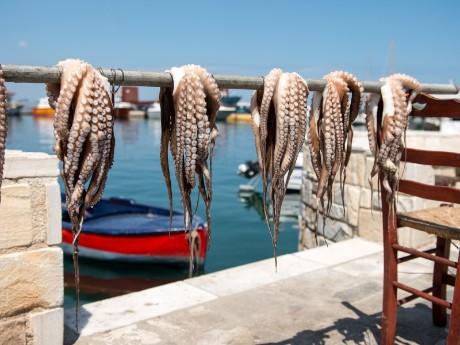 griechenland-kykladen-paros-octopus