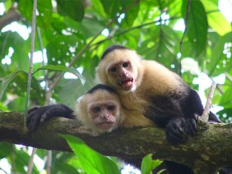 Höhepunkte Costa Ricas