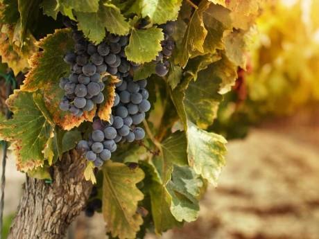 Wein_Winelands