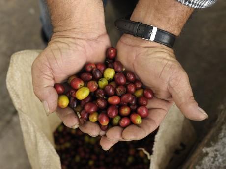 Kultur - Kaffee - Karibik