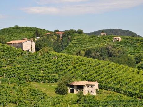 Weinberge in Proseccoregion