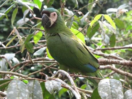 Ecuador für Naturfreunde