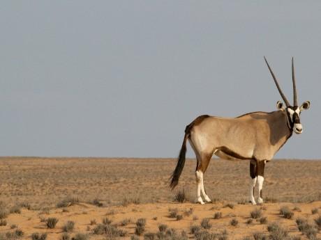 Tiere im Etosha & Waterberg Plateau Nationalpark