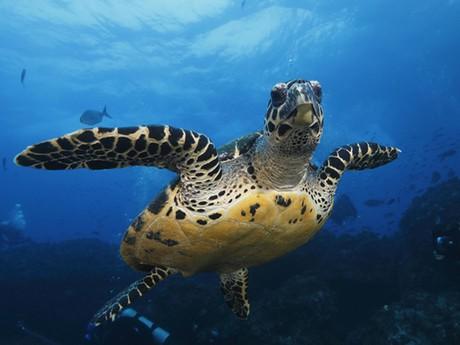 Inselhüpfen Galapagos