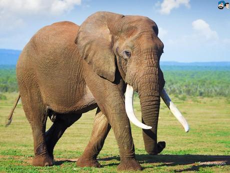Die Elefanten von Minneriya