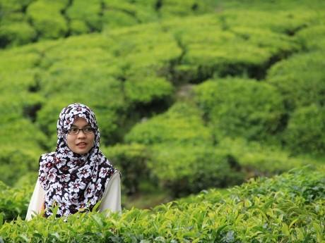 Frau in Teeplantage, Cameron Highlands
