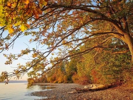 Herbst am Starnberger See