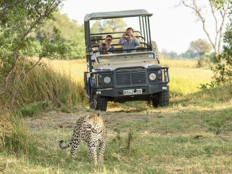 Pirschfahrt im Okavango